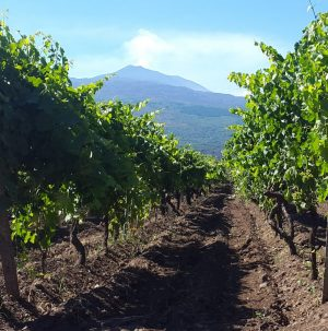 Sicily's Donnafugata to Produce Wines in Etna and Cerasuolo di Vittoria