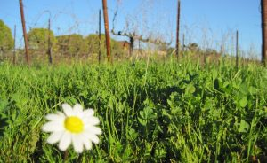 Spring in Norther Sonoma