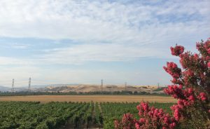 Livermore Valley Wine Country