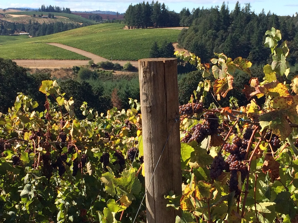 Oregon's Willamette Valley Vineyards