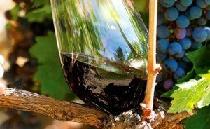 Livermore Taste our terroir 2