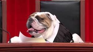 Puppy Justice Puppy Juice Last Week Tonight John Oliver