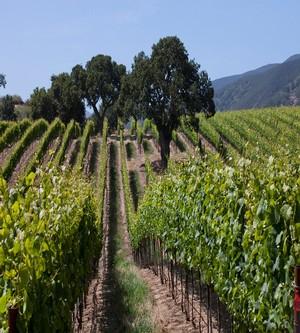 Santa Lucia Highlands  Pinot Noir and Chardonnay