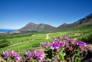 Photo Credit: Wines of South Africa