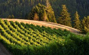 header_mendocino_wine_country