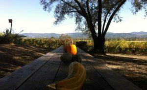 Wine Julie Johnson Winemaking