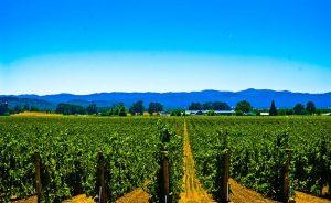 Wine Oh TV Taste Alexander Valley