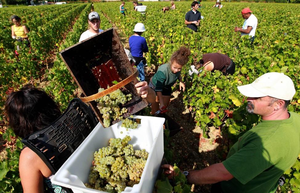 2012 Wine Harvest Around The World Wine Oh Tv