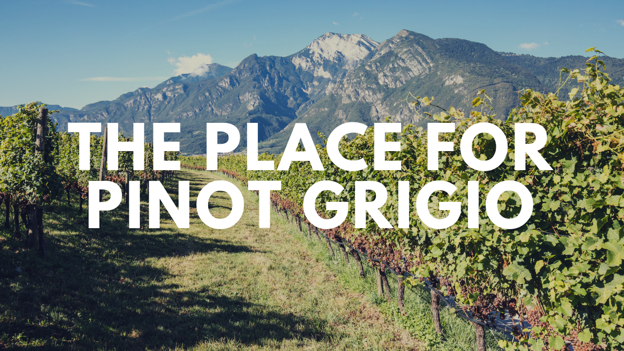 Learn About Pinot Grigio From One of Italy's Premiere Producers. Italy's top fine wine exporter shows us why not all Pinot Grigios are created equal.